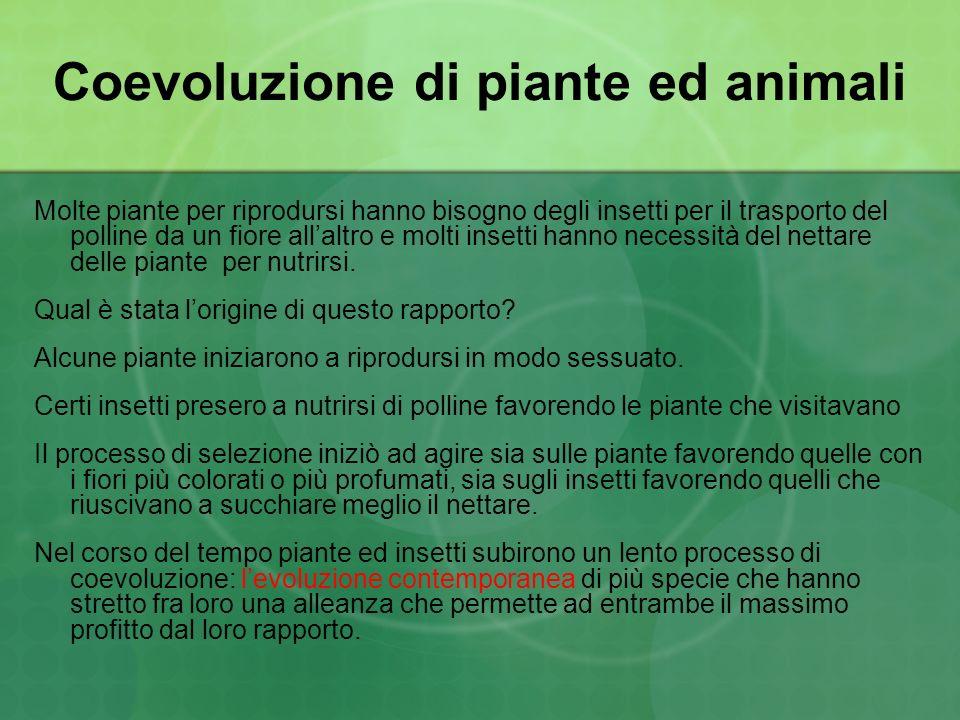 Coevoluzione di piante ed animali