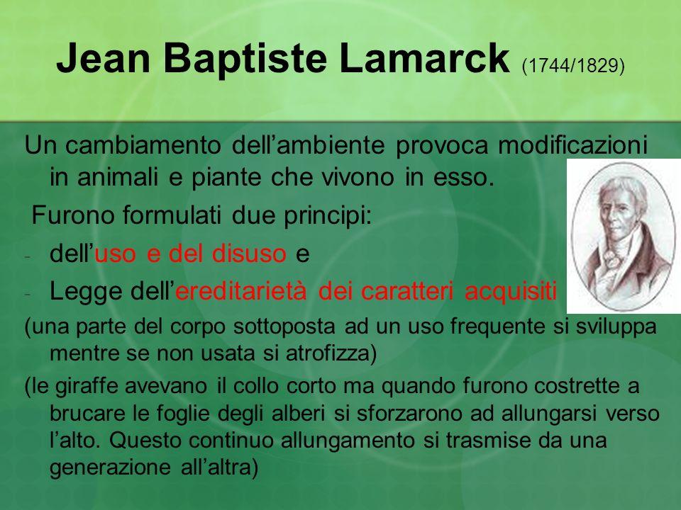 Jean Baptiste Lamarck (1744/1829)