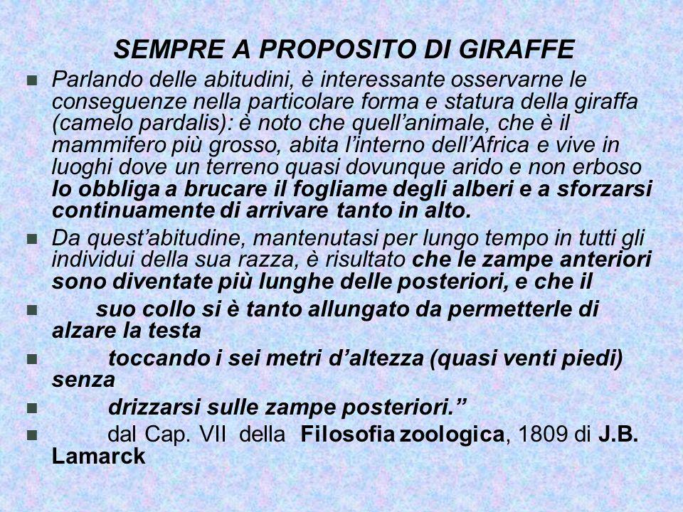 SEMPRE A PROPOSITO DI GIRAFFE
