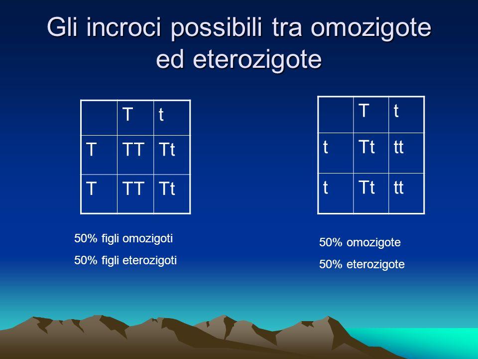 Gli incroci possibili tra omozigote ed eterozigote