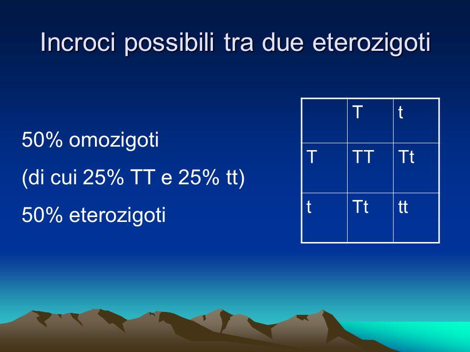 Incroci possibili tra due eterozigoti