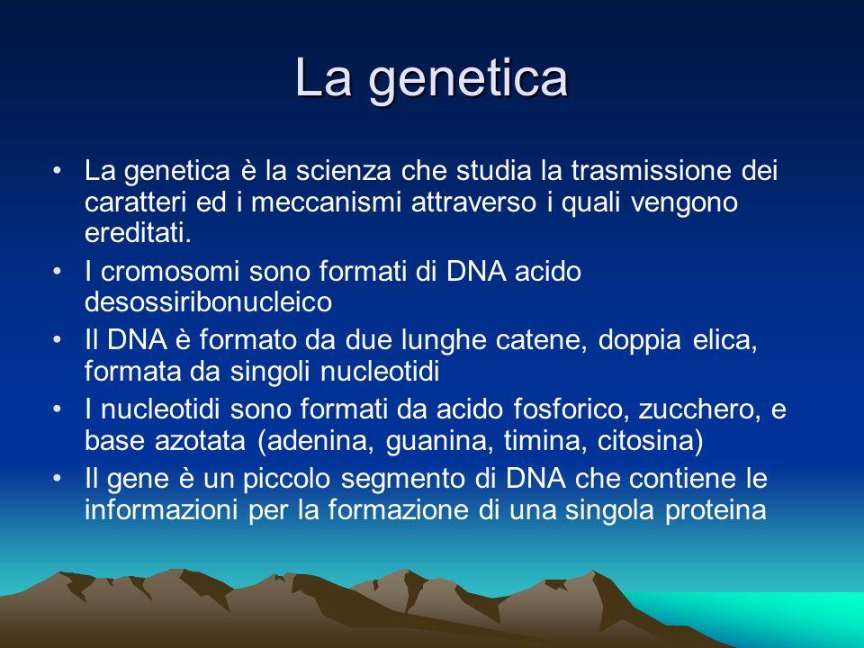La genetica La genetica è la scienza che studia la trasmissione dei caratteri ed i meccanismi attraverso i quali vengono ereditati.