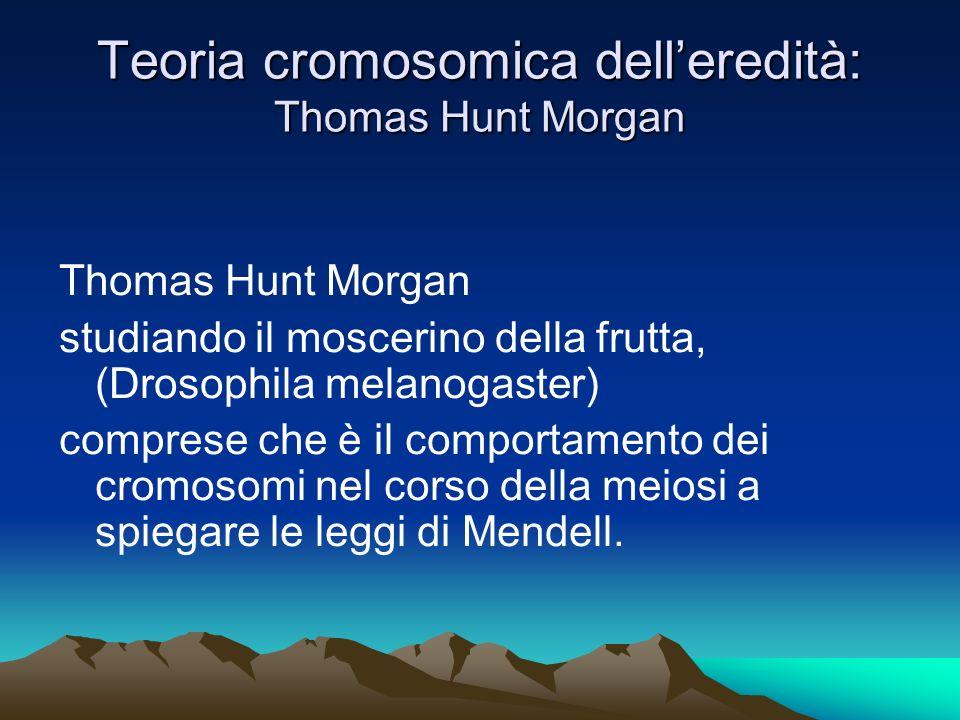 Teoria cromosomica dell'eredità: Thomas Hunt Morgan