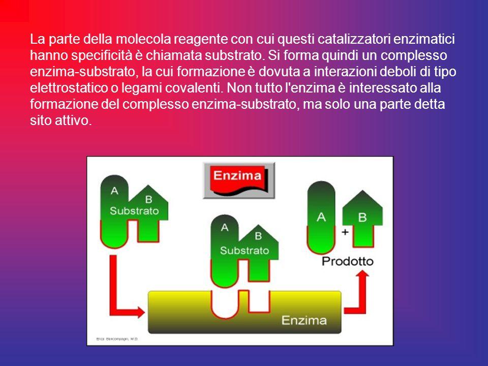 La parte della molecola reagente con cui questi catalizzatori enzimatici hanno specificità è chiamata substrato.