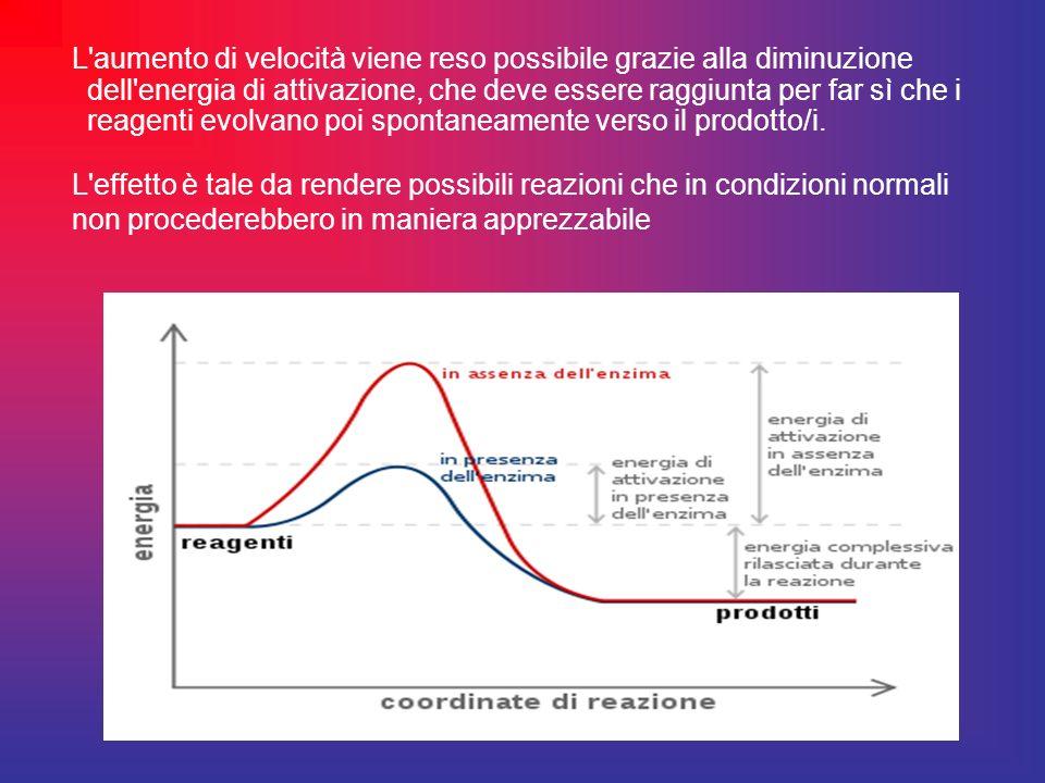 L aumento di velocità viene reso possibile grazie alla diminuzione dell energia di attivazione, che deve essere raggiunta per far sì che i reagenti evolvano poi spontaneamente verso il prodotto/i.
