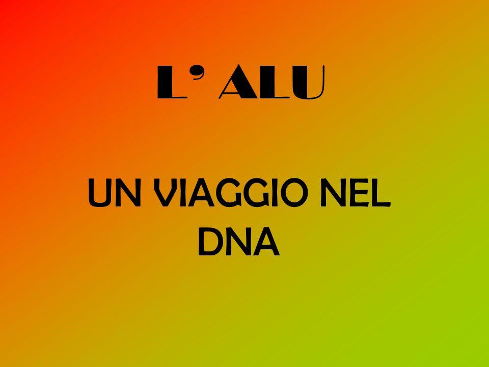 L' ALU UN VIAGGIO NEL DNA