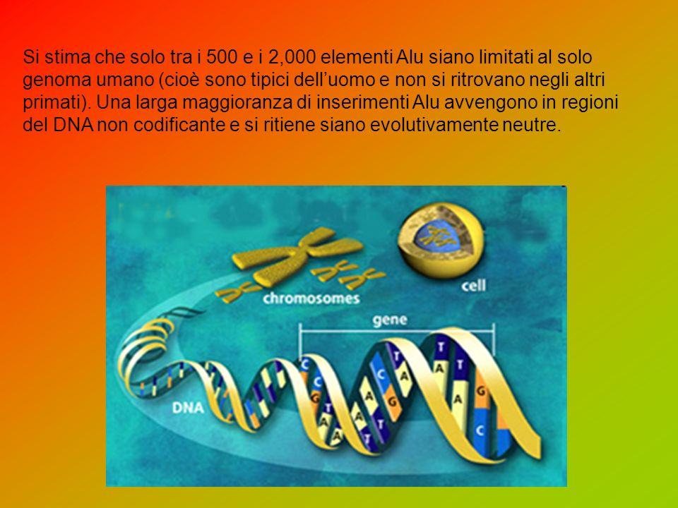Si stima che solo tra i 500 e i 2,000 elementi Alu siano limitati al solo genoma umano (cioè sono tipici dell'uomo e non si ritrovano negli altri primati).