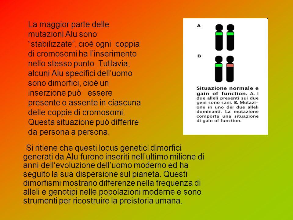 La maggior parte delle mutazioni Alu sono stabilizzate , cioè ogni coppia di cromosomi ha l'inserimento nello stesso punto. Tuttavia, alcuni Alu specifici dell'uomo sono dimorfici, cioè un inserzione può essere presente o assente in ciascuna delle coppie di cromosomi. Questa situazione può differire da persona a persona.