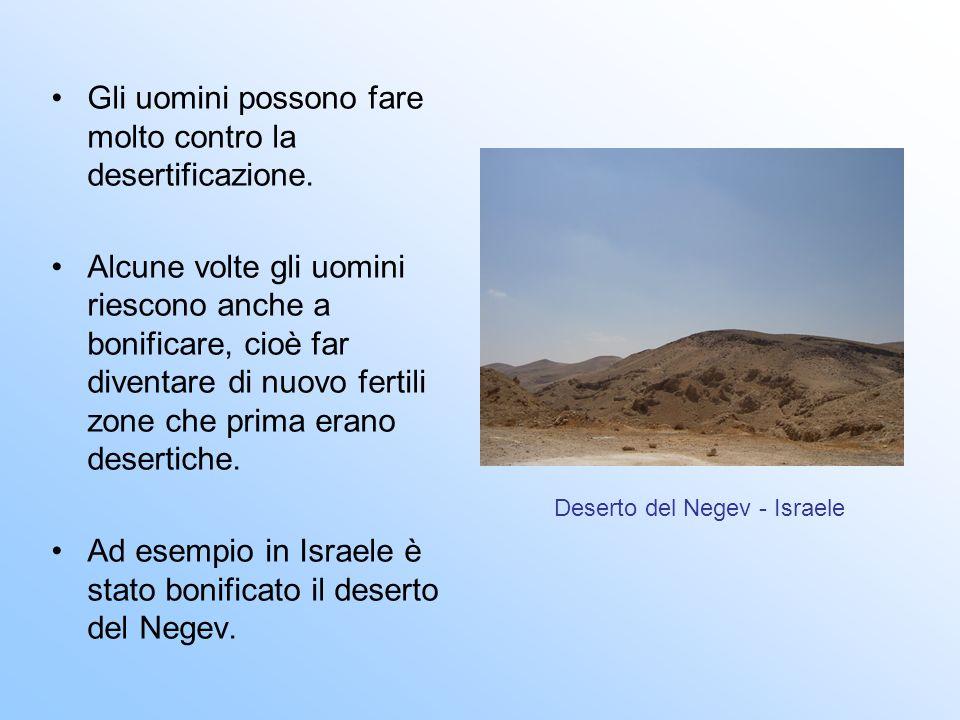 Deserto del Negev - Israele