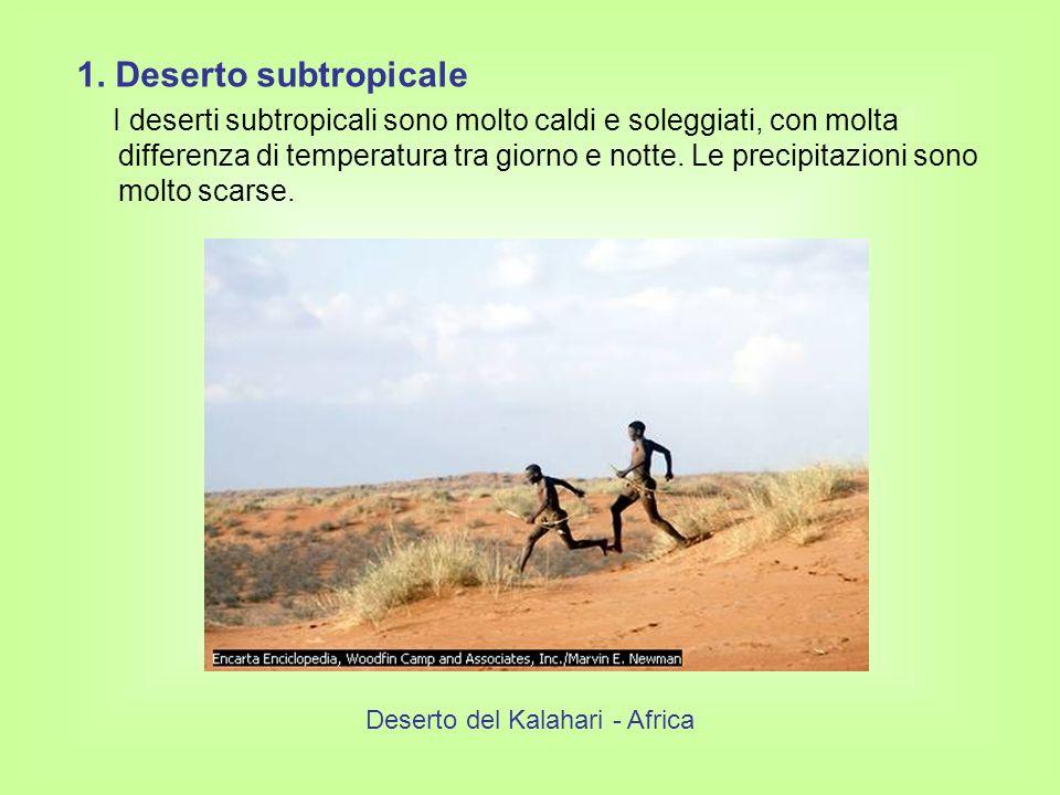 Deserto del Kalahari - Africa