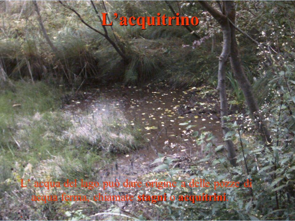 L'acquitrino L' acqua del lago può dare origine a delle pozze di acqua ferma, chiamate stagni o acquitrini.
