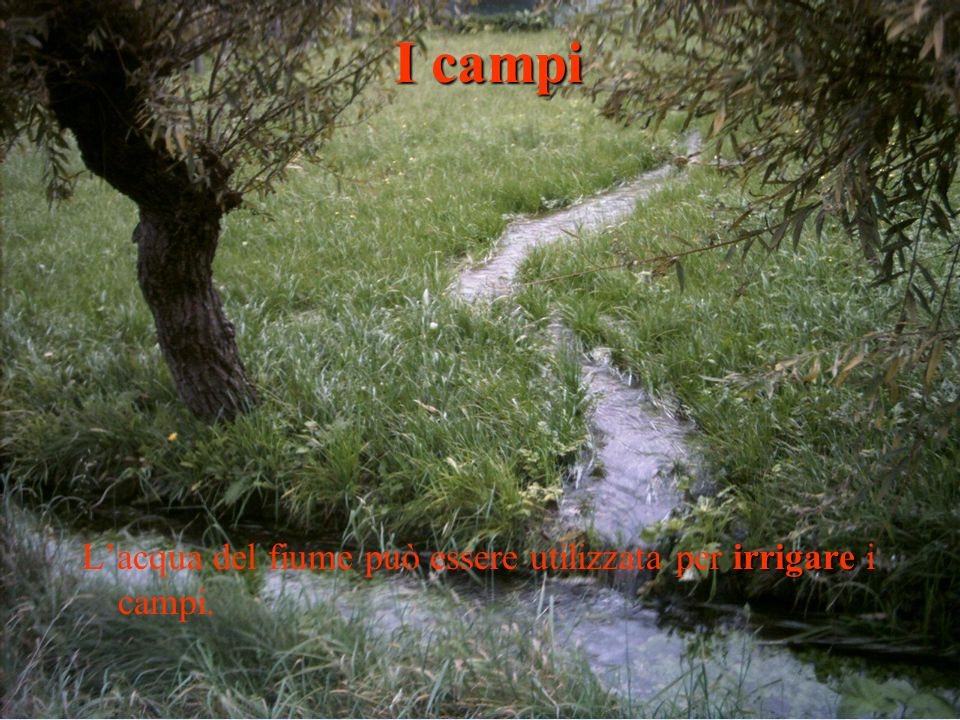 I campi L'acqua del fiume può essere utilizzata per irrigare i campi.
