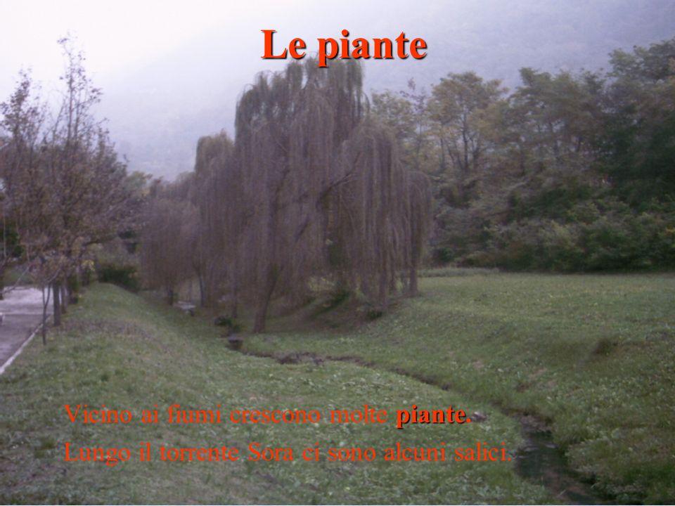 Le piante Vicino ai fiumi crescono molte piante.