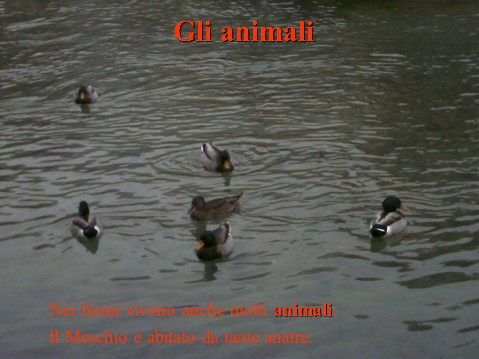 Gli animali Nei fiumi vivono anche molti animali.