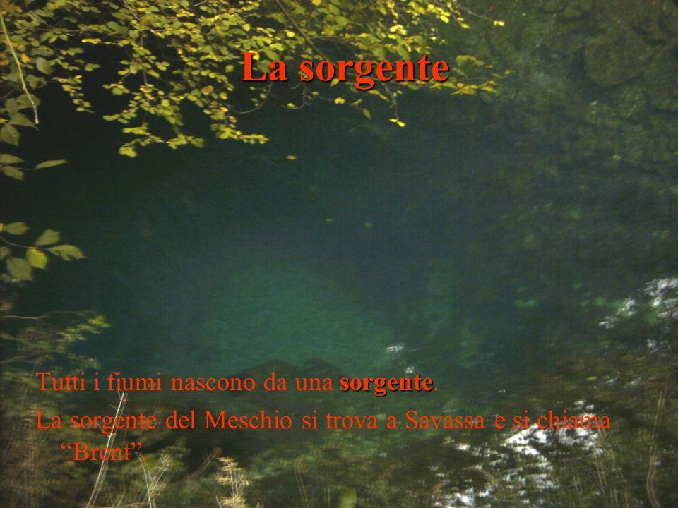 La sorgente Tutti i fiumi nascono da una sorgente.