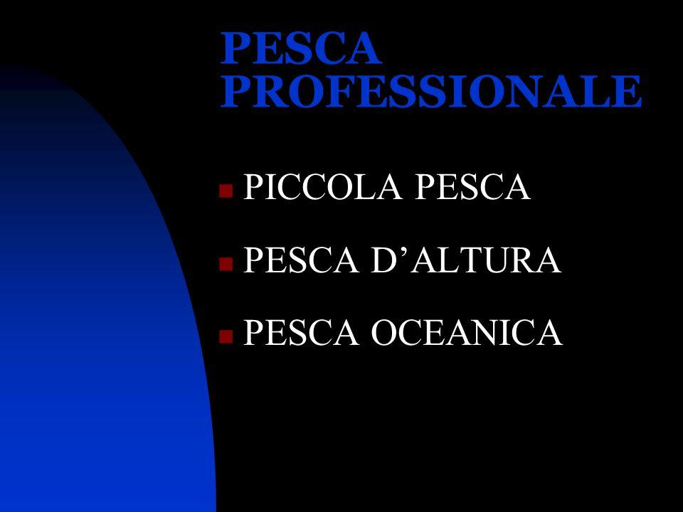 PESCA PROFESSIONALE PICCOLA PESCA PESCA D'ALTURA PESCA OCEANICA