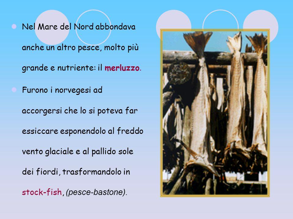 Nel Mare del Nord abbondava anche un altro pesce, molto più grande e nutriente: il merluzzo.