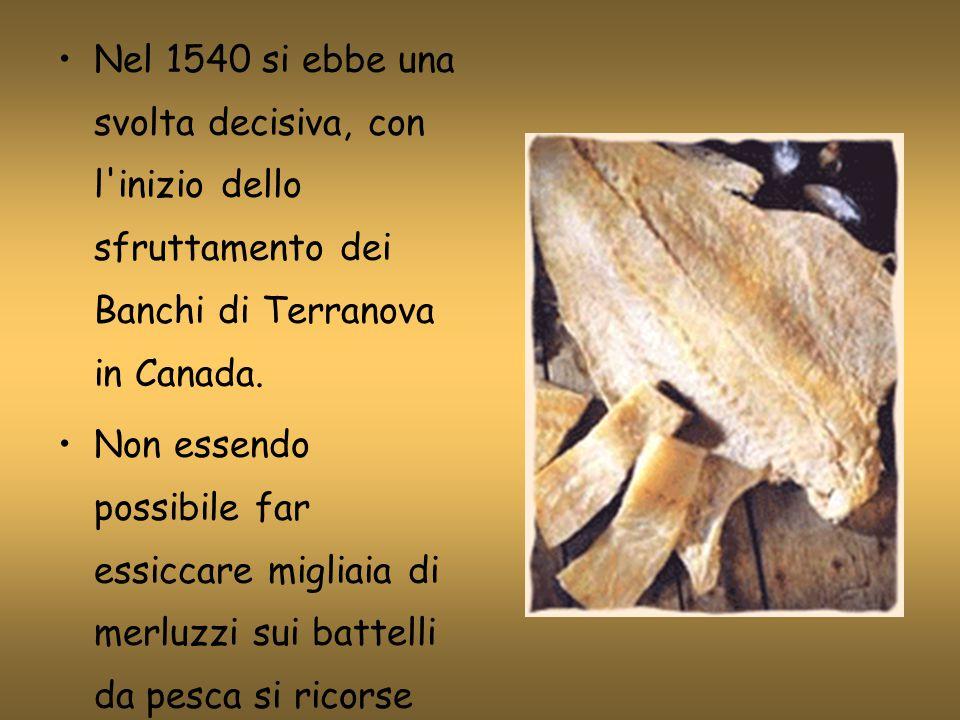Nel 1540 si ebbe una svolta decisiva, con l inizio dello sfruttamento dei Banchi di Terranova in Canada.