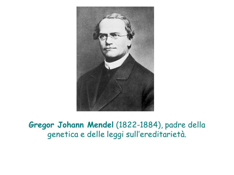 Gregor Johann Mendel (1822-1884), padre della genetica e delle leggi sull'ereditarietà.