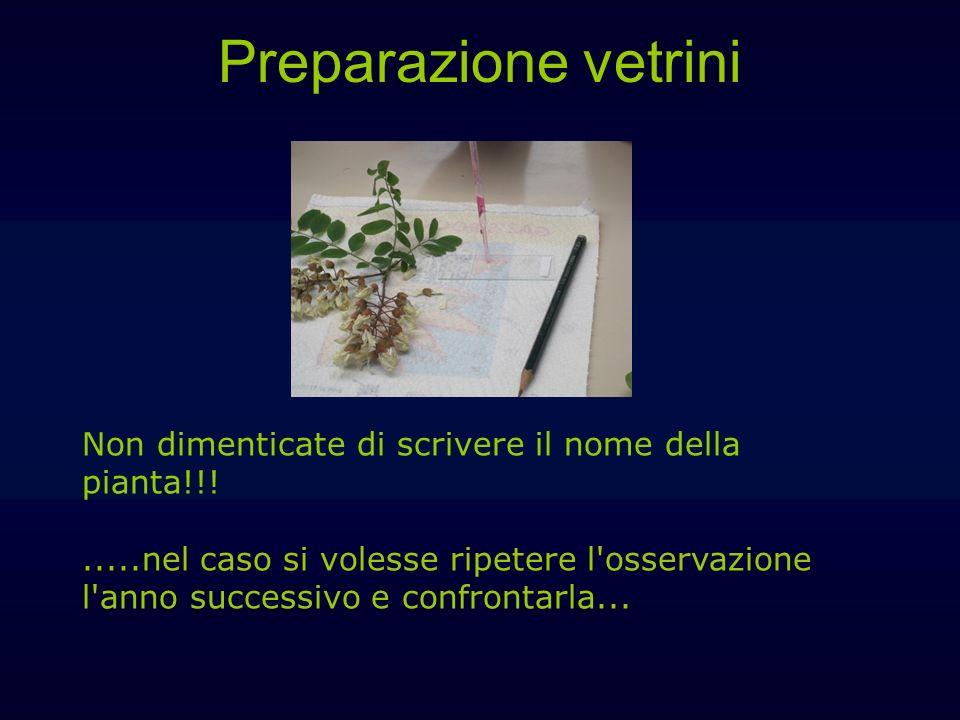 Preparazione vetrini Non dimenticate di scrivere il nome della pianta!!!