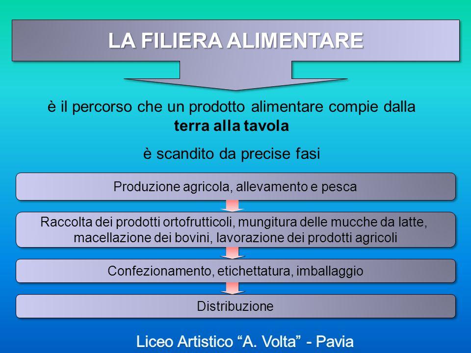 LA FILIERA ALIMENTARE è il percorso che un prodotto alimentare compie dalla terra alla tavola. è scandito da precise fasi.
