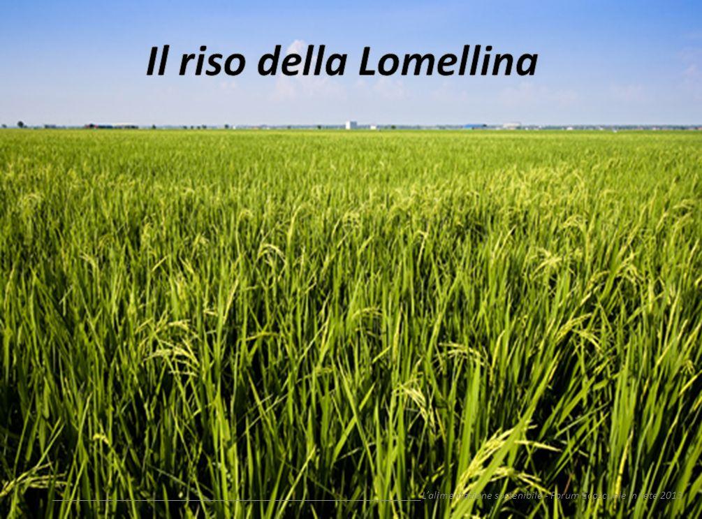 Il riso della Lomellina