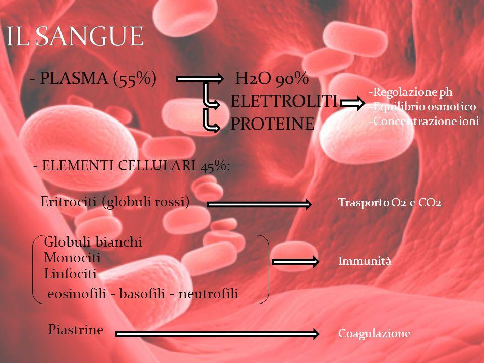 IL SANGUE - PLASMA (55%) H2O 90% ELETTROLITI PROTEINE