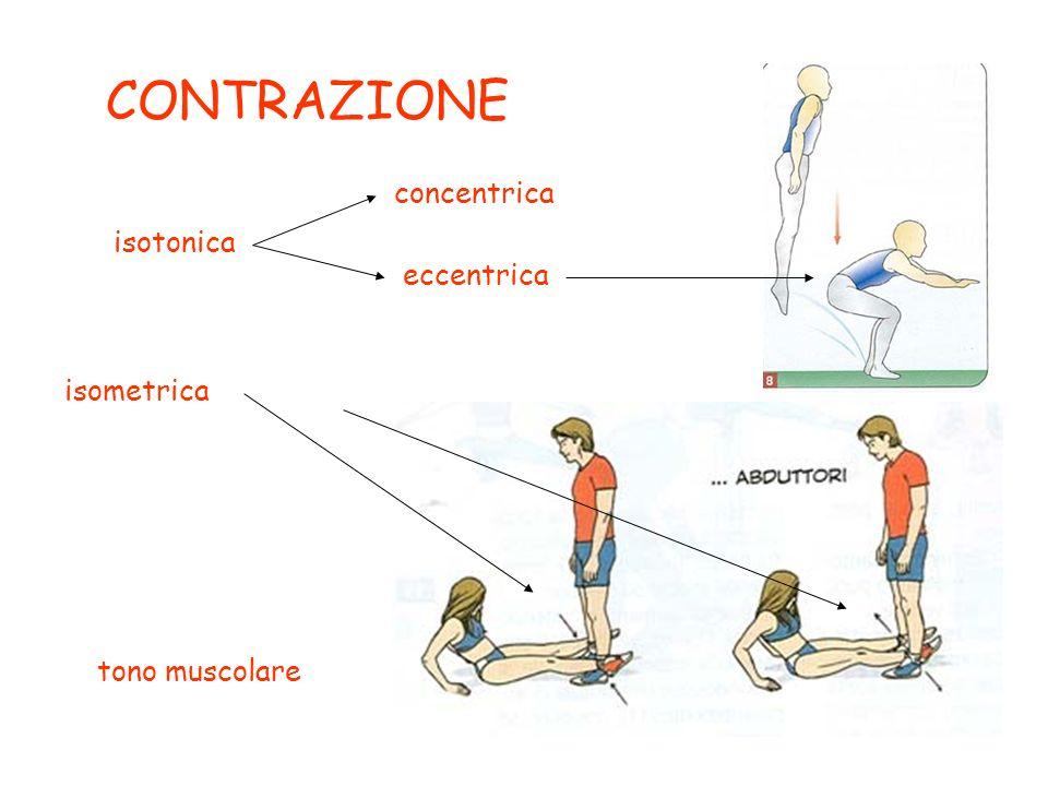 CONTRAZIONE concentrica isotonica eccentrica isometrica tono muscolare