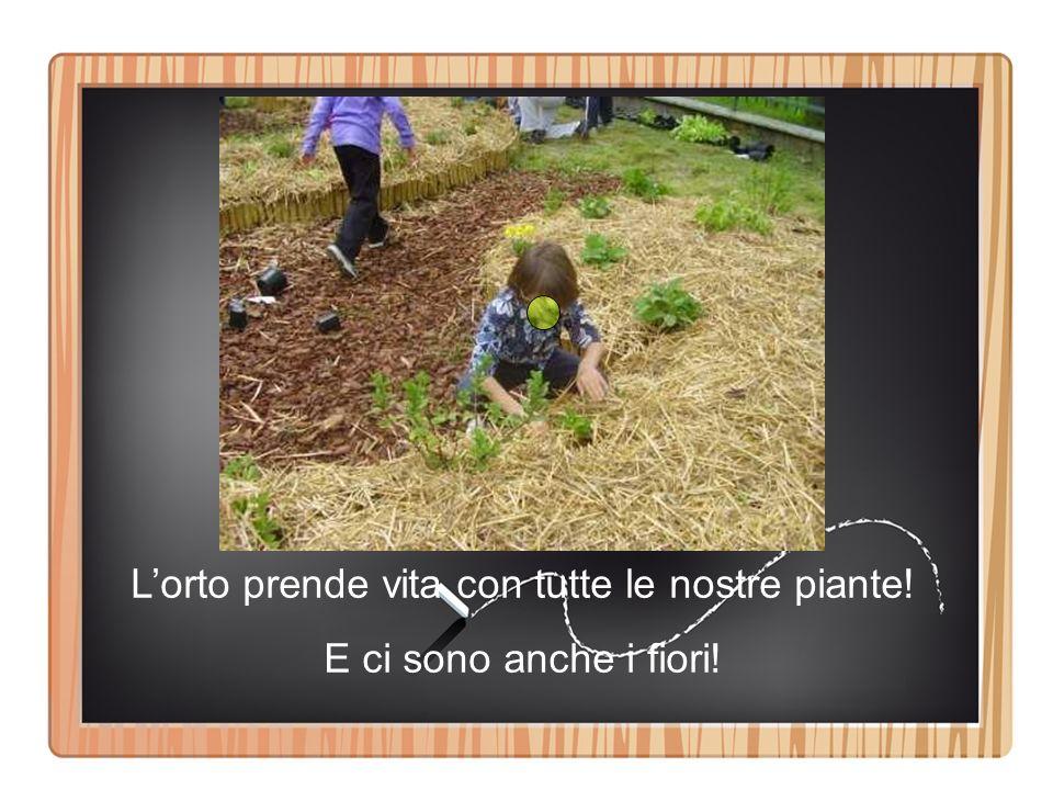 L'orto prende vita con tutte le nostre piante!