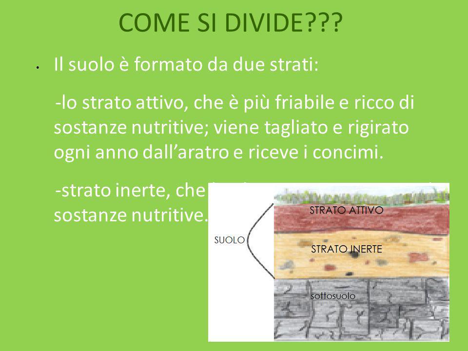 COME SI DIVIDE Il suolo è formato da due strati: