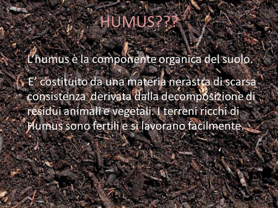HUMUS L'humus è la componente organica del suolo.