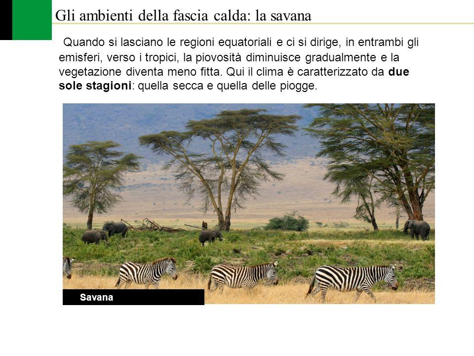Gli ambienti della fascia calda: la savana