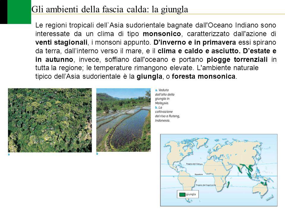 Gli ambienti della fascia calda: la giungla
