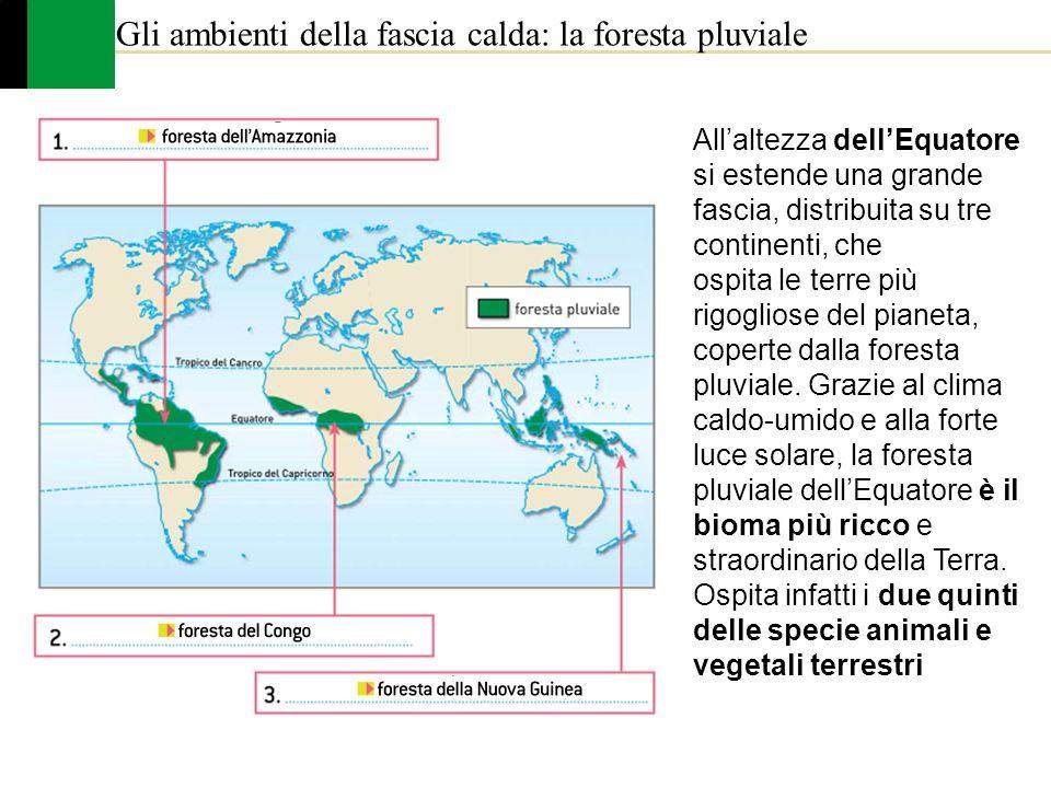 Gli ambienti della fascia calda: la foresta pluviale