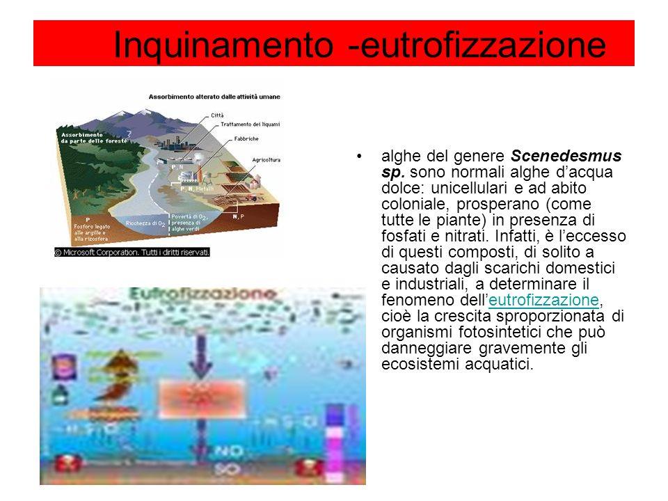 Inquinamento -eutrofizzazione