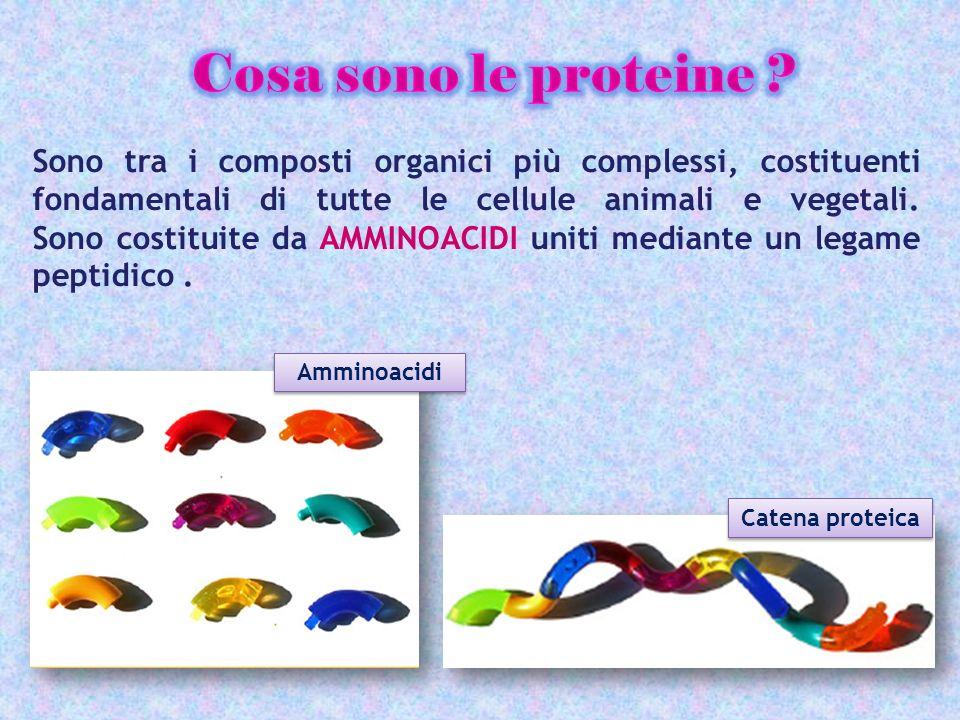 Cosa sono le proteine