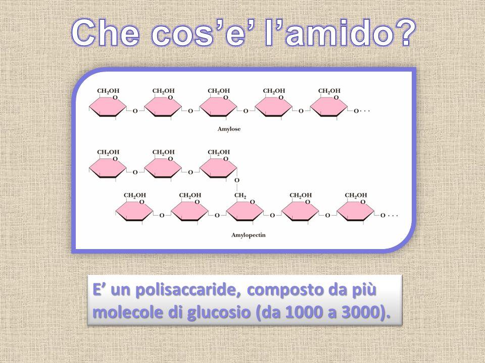 Che cos'e' l'amido E' un polisaccaride, composto da più molecole di glucosio (da 1000 a 3000).
