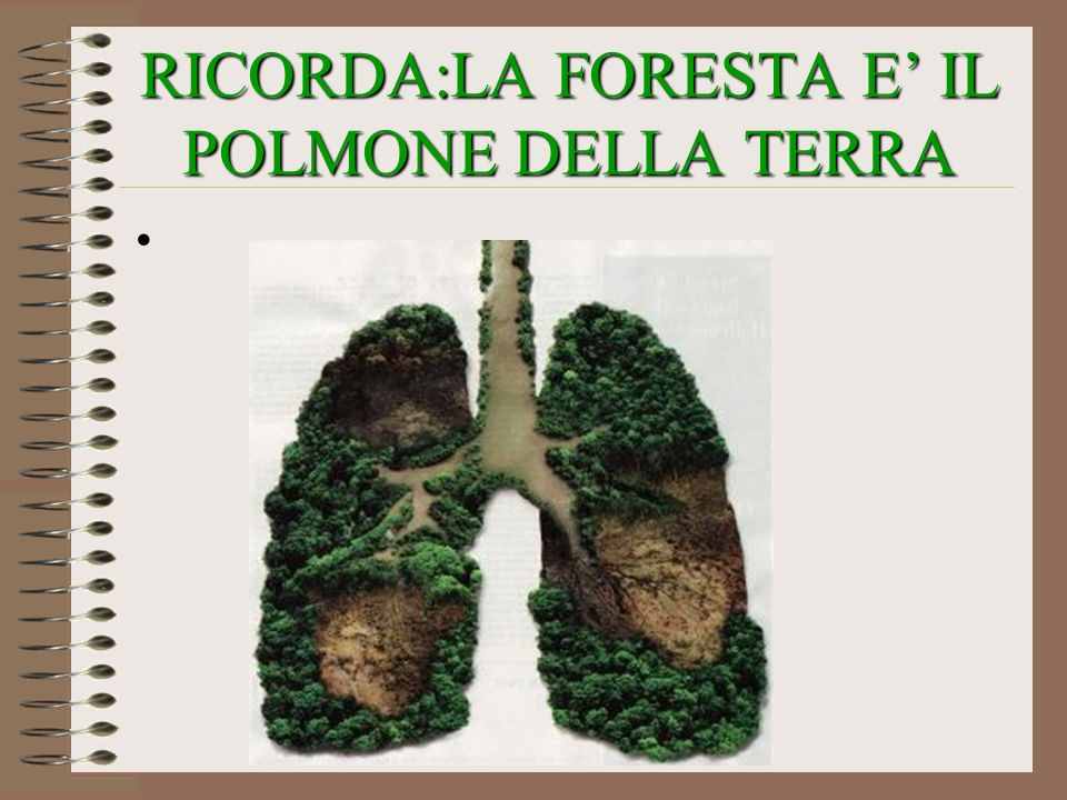 RICORDA:LA FORESTA E' IL POLMONE DELLA TERRA