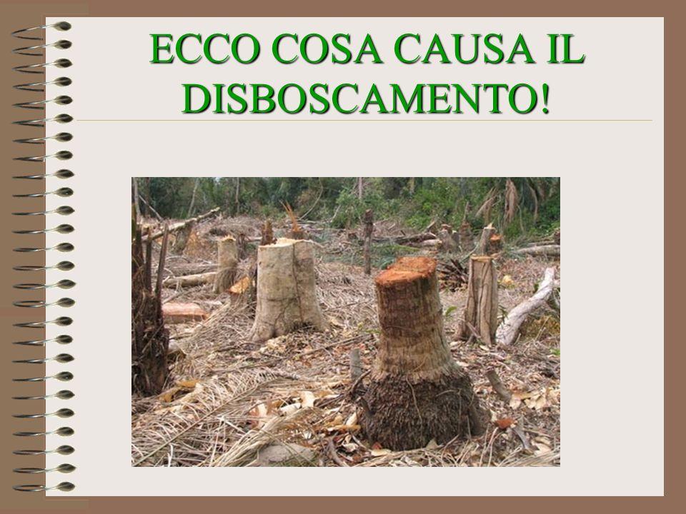 ECCO COSA CAUSA IL DISBOSCAMENTO!