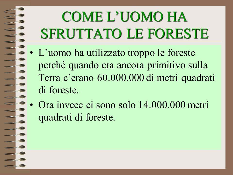 COME L'UOMO HA SFRUTTATO LE FORESTE