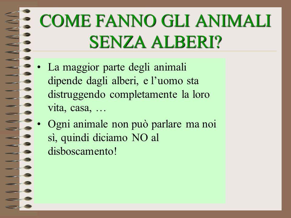 COME FANNO GLI ANIMALI SENZA ALBERI