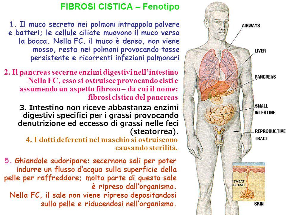 FIBROSI CISTICA – Fenotipo