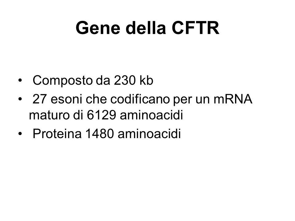 Gene della CFTR Composto da 230 kb