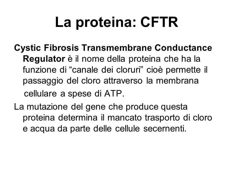La proteina: CFTR