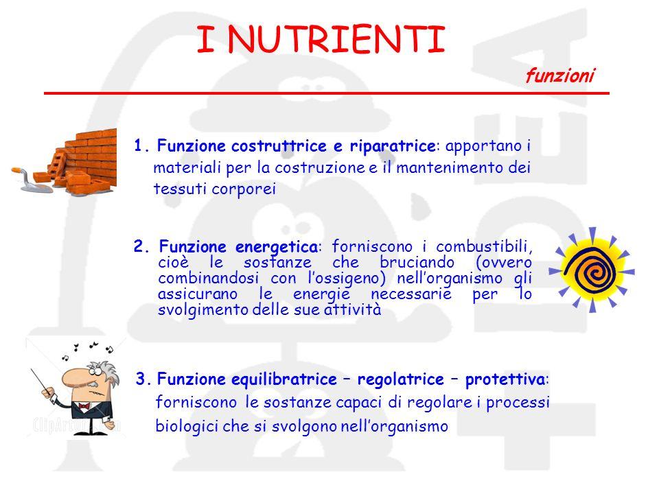 I NUTRIENTI funzioni 1. Funzione costruttrice e riparatrice: apportano i. materiali per la costruzione e il mantenimento dei.