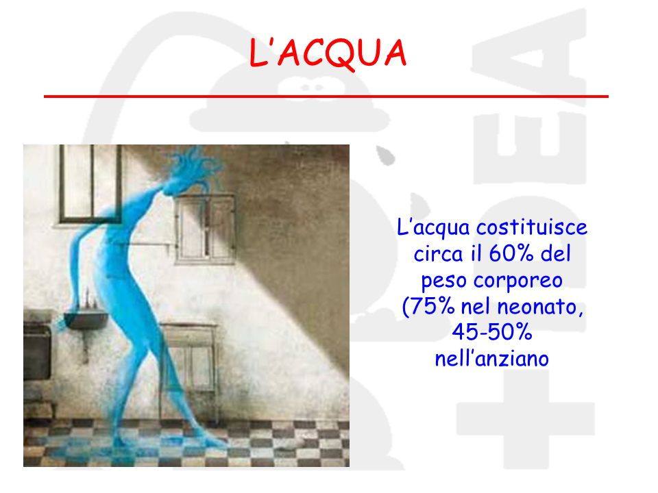 L'ACQUA L'acqua costituisce circa il 60% del peso corporeo (75% nel neonato, 45-50% nell'anziano