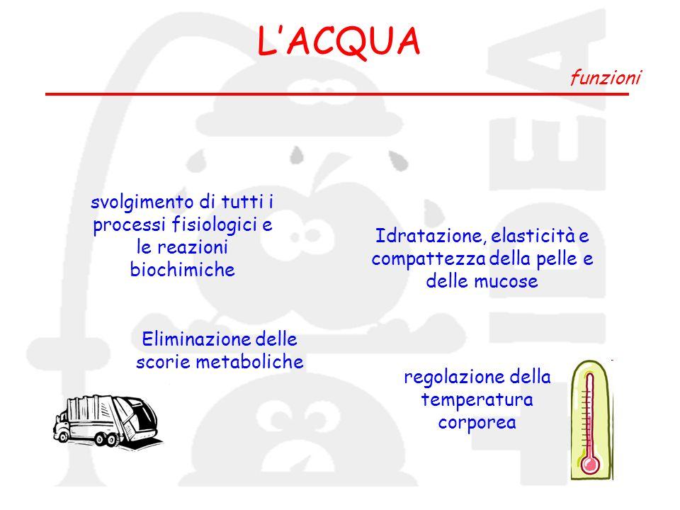 L'ACQUA funzioni. svolgimento di tutti i processi fisiologici e le reazioni biochimiche.