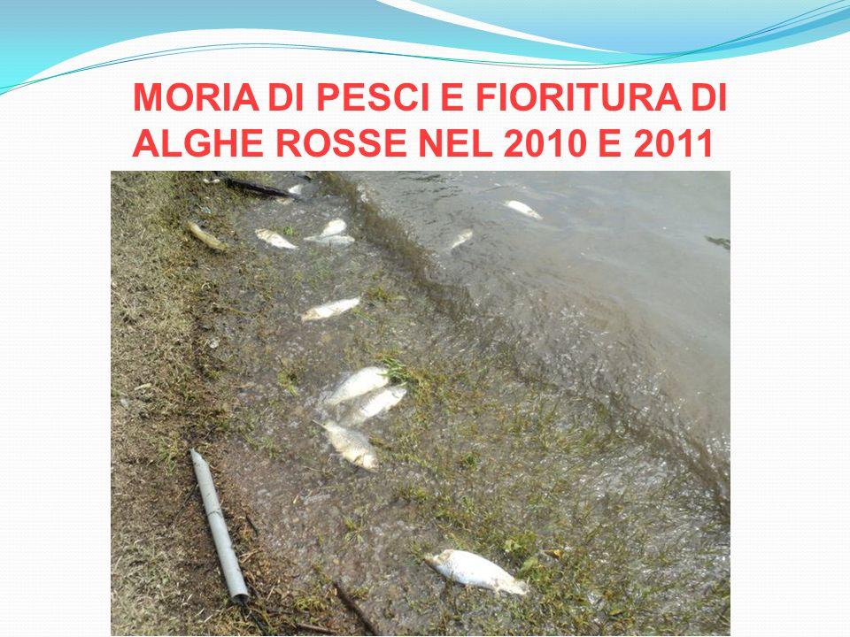 MORIA DI PESCI E FIORITURA DI ALGHE ROSSE NEL 2010 E 2011