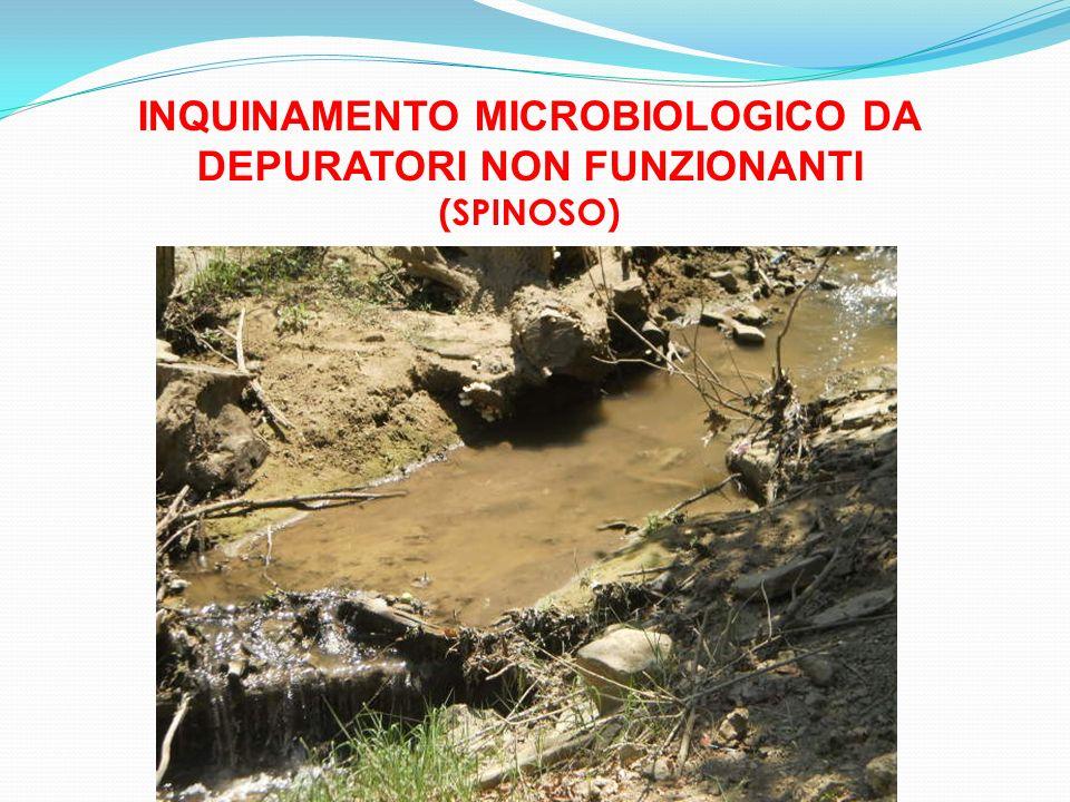 INQUINAMENTO MICROBIOLOGICO DA DEPURATORI NON FUNZIONANTI (SPINOSO)