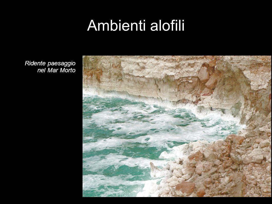 Ambienti alofili Ridente paesaggio nel Mar Morto